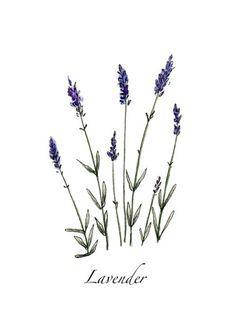 Lavender Clip Art & Vectors.