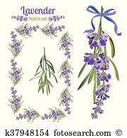 Lavandula angustifolia Clip Art Illustrations. 28 lavandula.