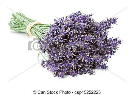 Stock Photo of Bunch of dried Lavender flowers (Lavandula.
