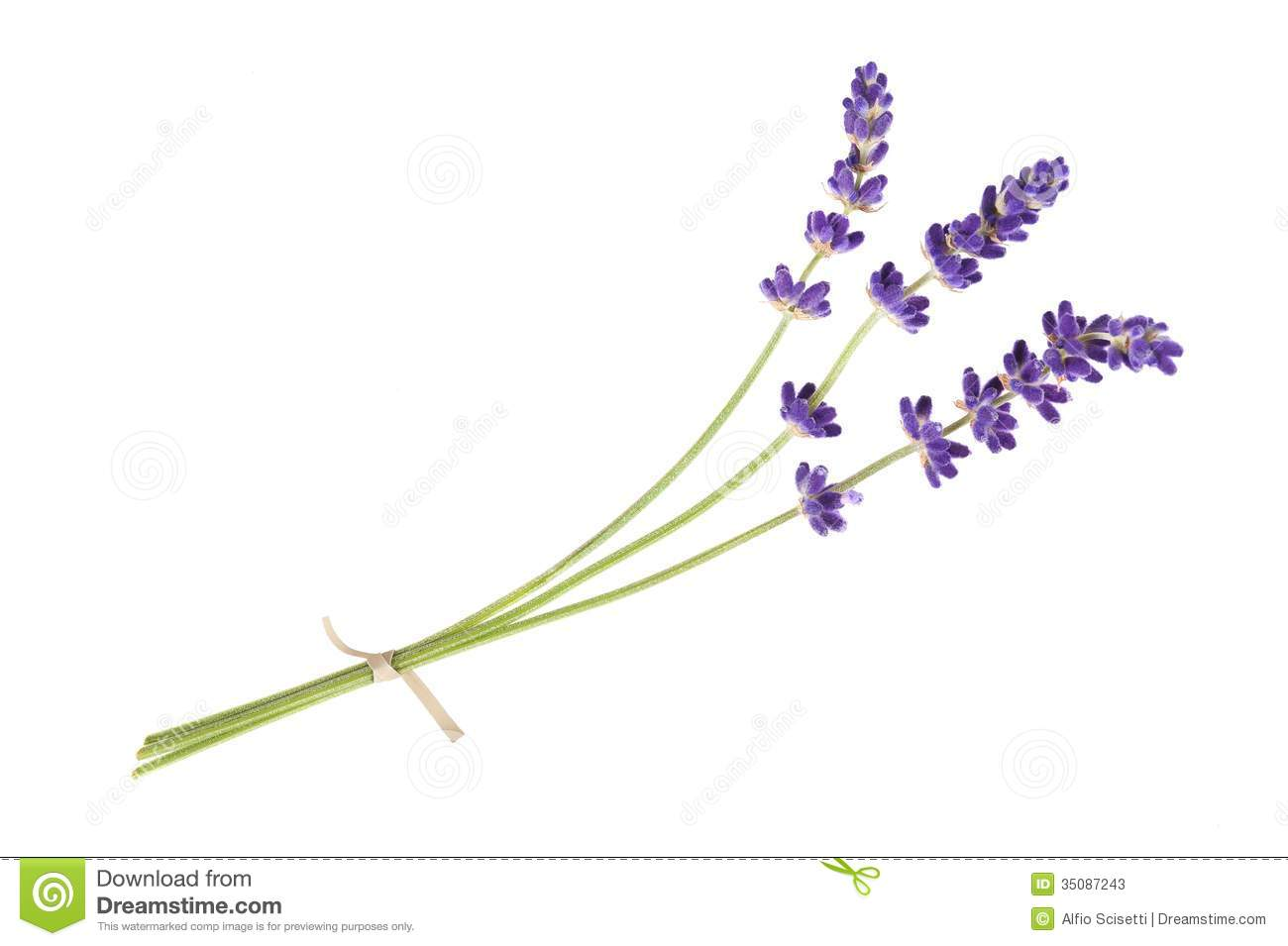 Lavender Flowers Herb Leaves Stock Photos, Images, & Pictures.