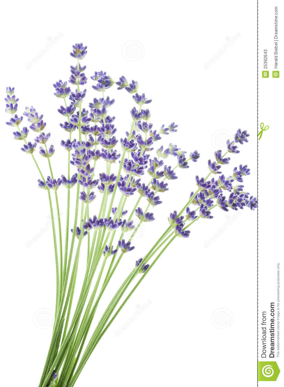 Bunch Of Lavender Flowers Stock Photos.