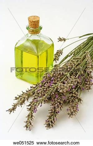 Stock Image of Lavender essential oil (Lavandula officinalis.