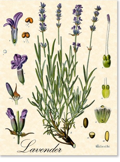 1000+ images about Botanicals on Pinterest.
