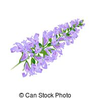 Lavandula officinalis Illustrations and Stock Art. 12 Lavandula.