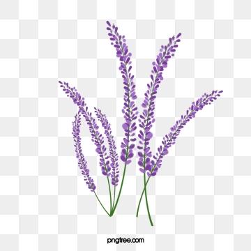 Lavender PNG Images.