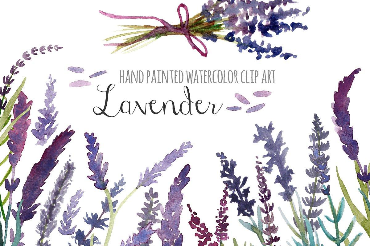 Lavender watercolor clip art.