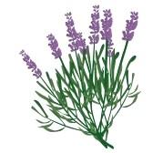 Lavender Flower Clip Art Free.