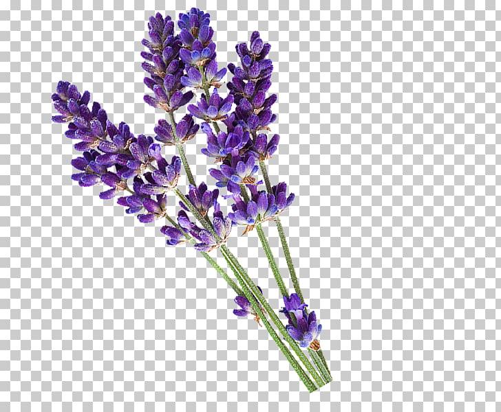 English lavender Essential oil PiperWai Cosmetics, lavender.