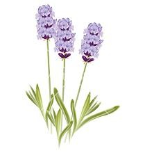 Free Free Cliparts Lavender, Download Free Clip Art, Free.