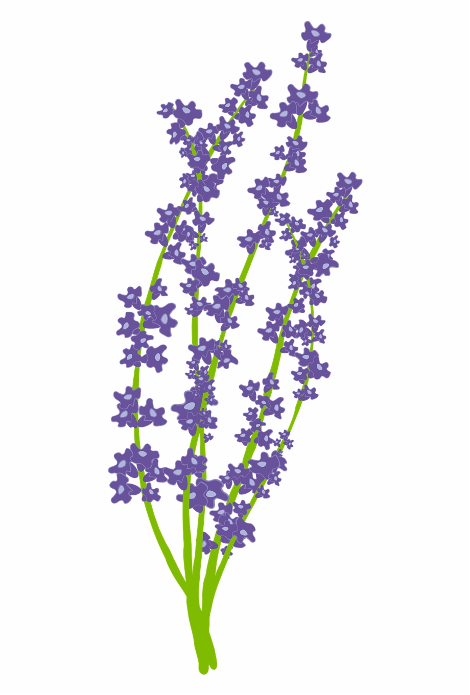 Flower Nature Free Lavender Vector Png.