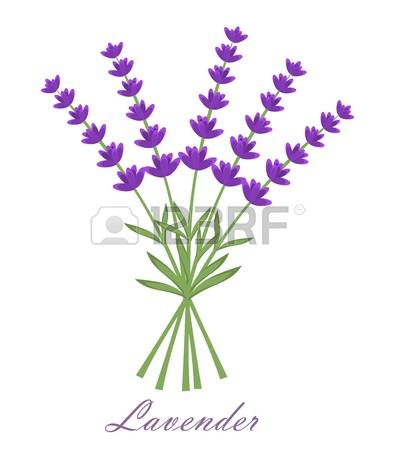 7,243 Lavender Stock Illustrations, Cliparts And Royalty Free.