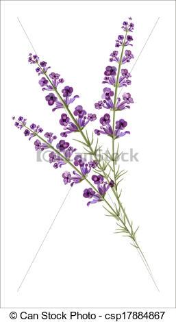 Lavender Line Clipart.