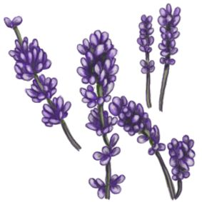 Lavender floral clipart.