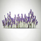 Clipart of Lavender background k8716985.