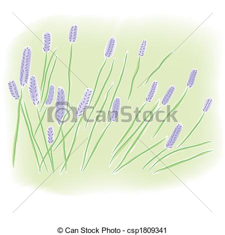 Clipart of Watercolor lavender field.