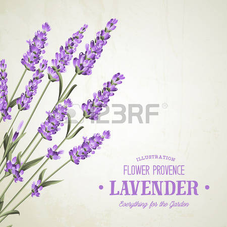 701 Lavender Field Stock Illustrations, Cliparts And Royalty Free.