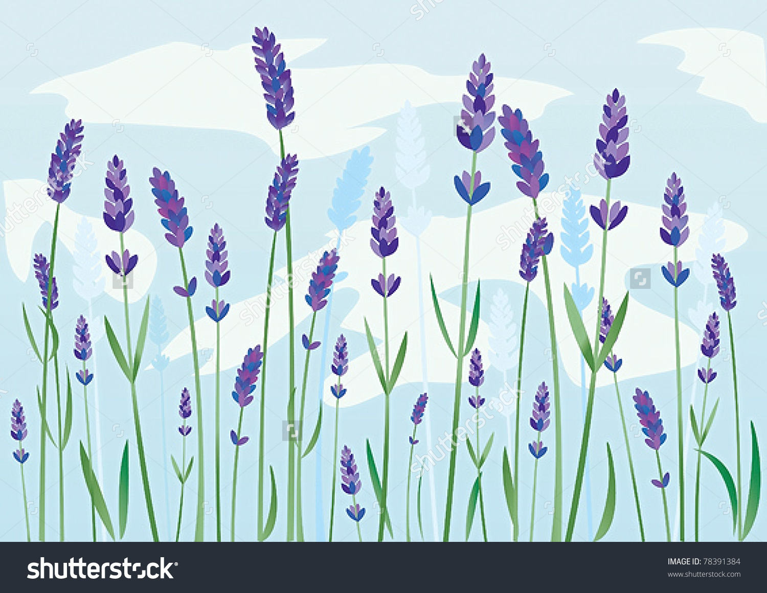 Lavender Field Stock Vector Illustration 78391384 : Shutterstock.