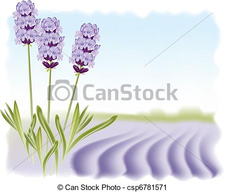 Lavender Illustrations and Stock Art. 4,832 Lavender illustration.