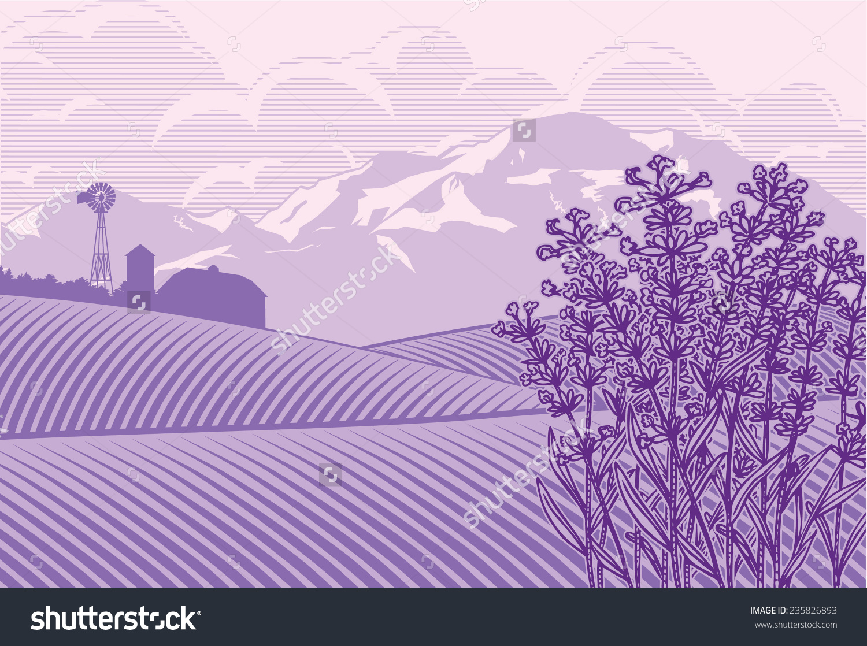 Lavender field clipart hd.