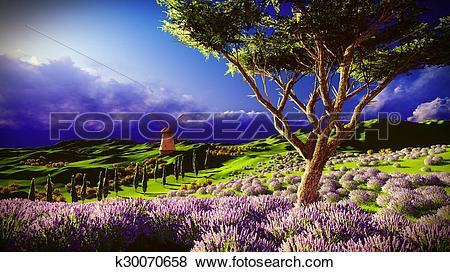 Stock Illustration of Lavender fields k30070658.