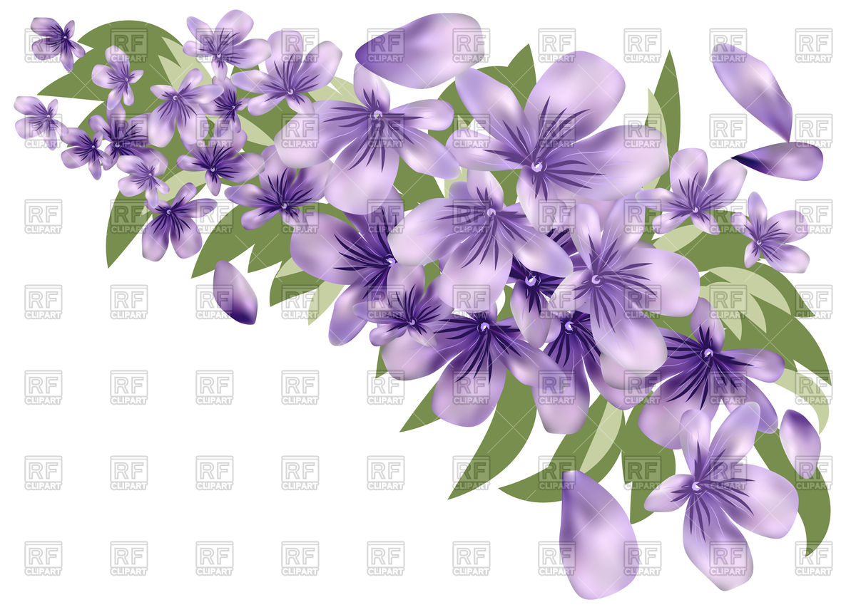 Lavender flower with leaves Stock Vector Image.