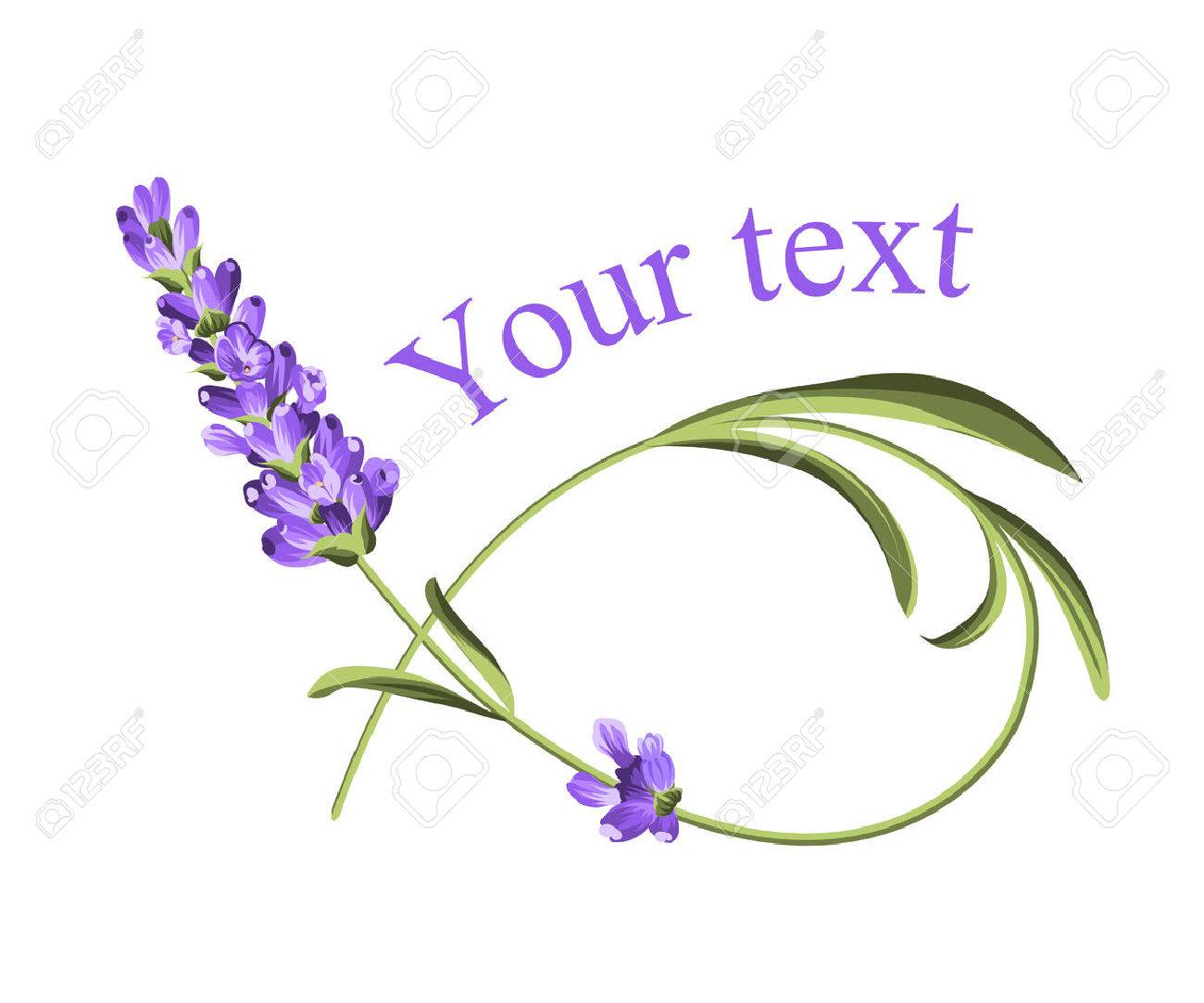 Your text template. Frame of lavender flower in watercolor paint...