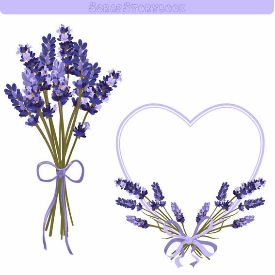 Lavender clipart vector.