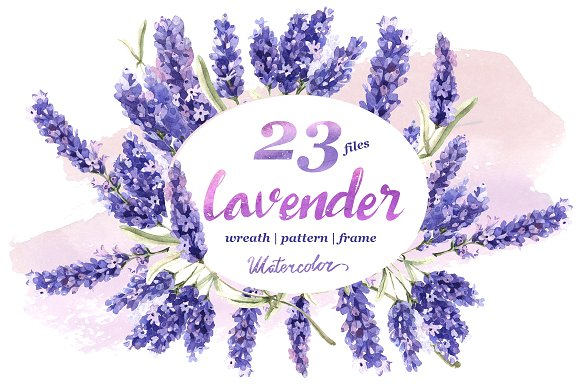Lavender PNG flowers in watercolor.