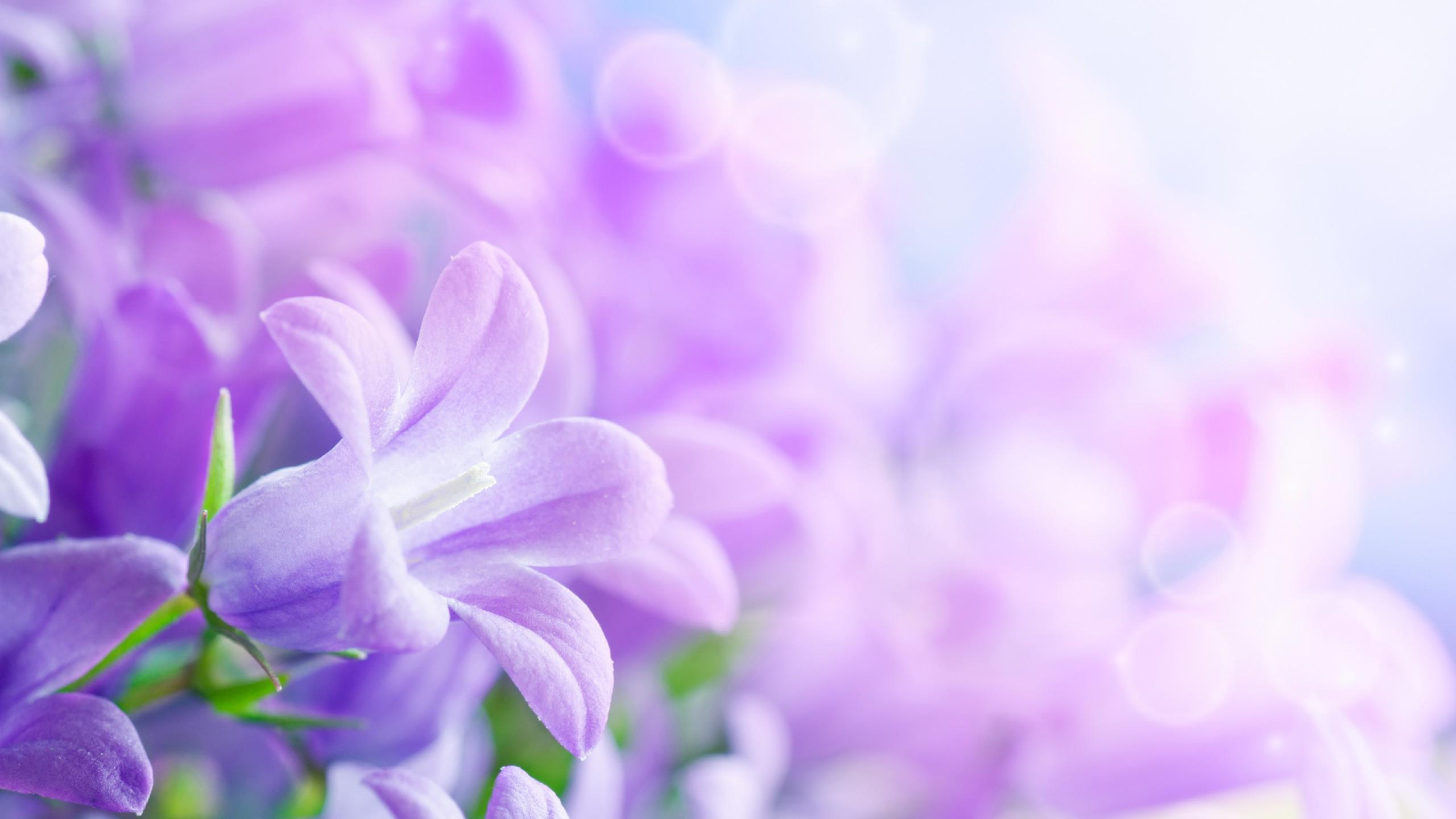 Clipart Lavender Flowers.