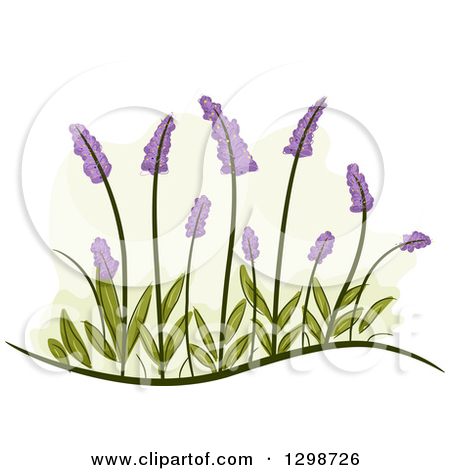 Clipart of Lavender Flowers and Leaves.