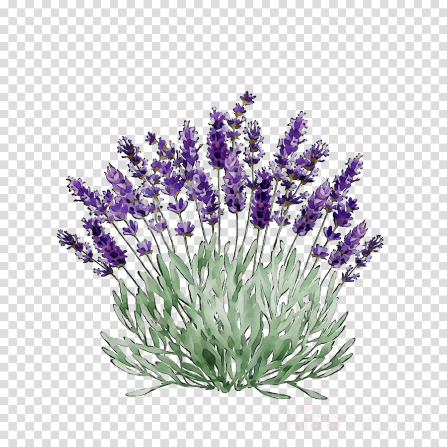 Lavender Flower clipart.