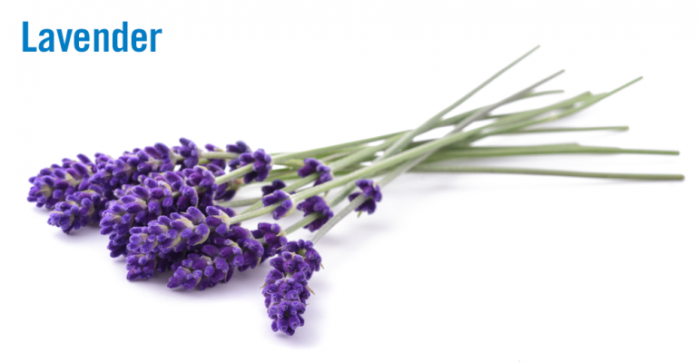 Flavor of the Week: Lavender blossoms past sweet into savory.