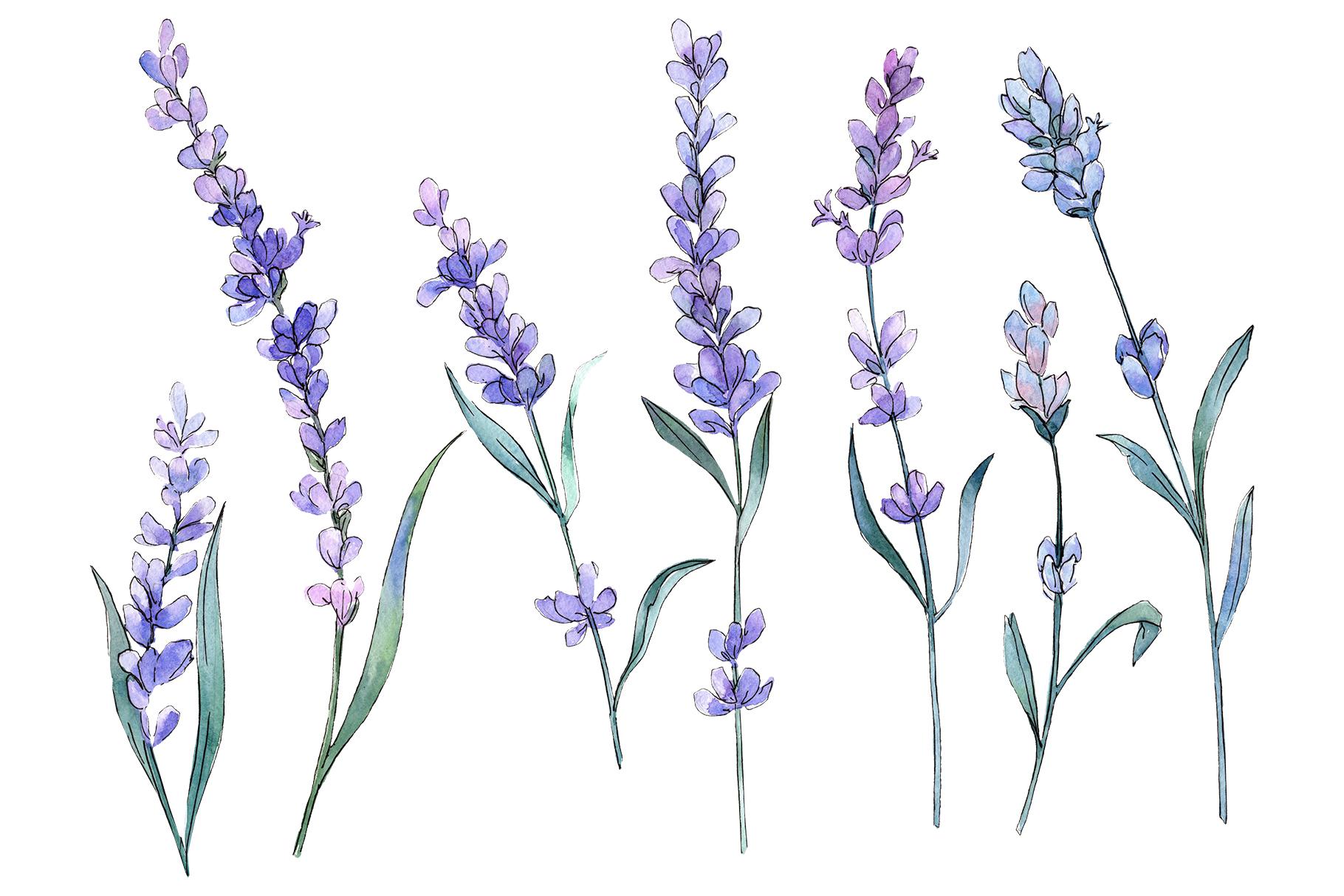 Plant lavender watercolor png.
