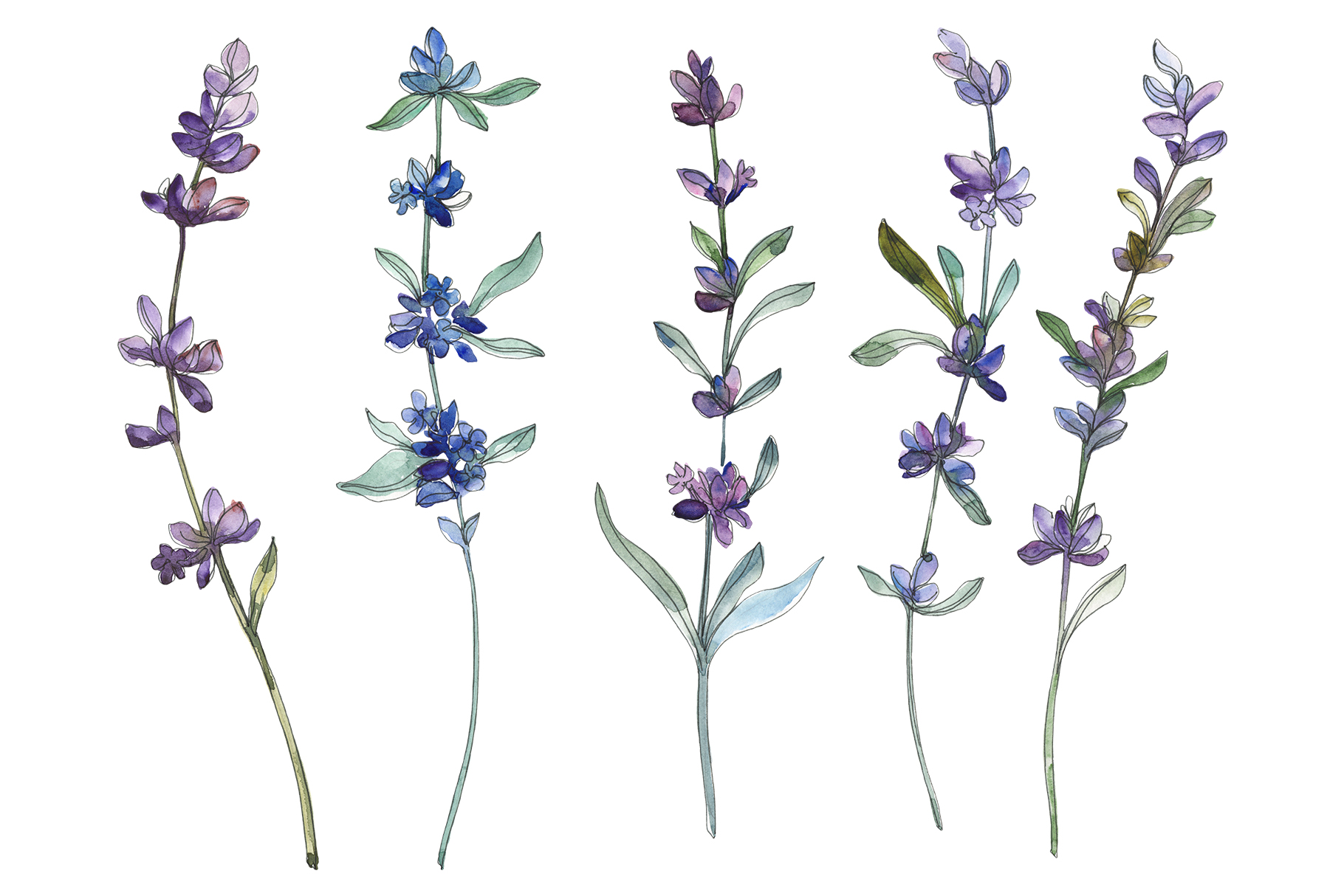 Lavender Watercolor png.