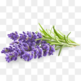 Lavender Png (111+ images in Collection) Page 2.