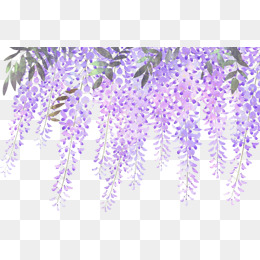 Lavender PNG Images, Download 474 Lavender PNG Resources.