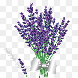 Lavender Vector Png, Vector, PSD, and Clipart With.