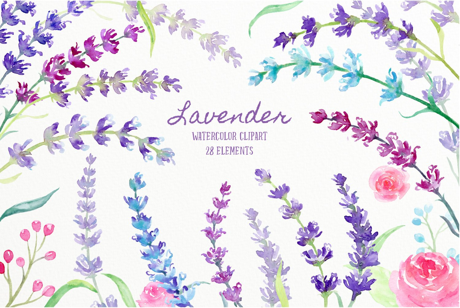 Watercolor Clipart Lavender, sprig of lavender, lavender flowers, blue,  pink, purple herb for instant download scrapbook.