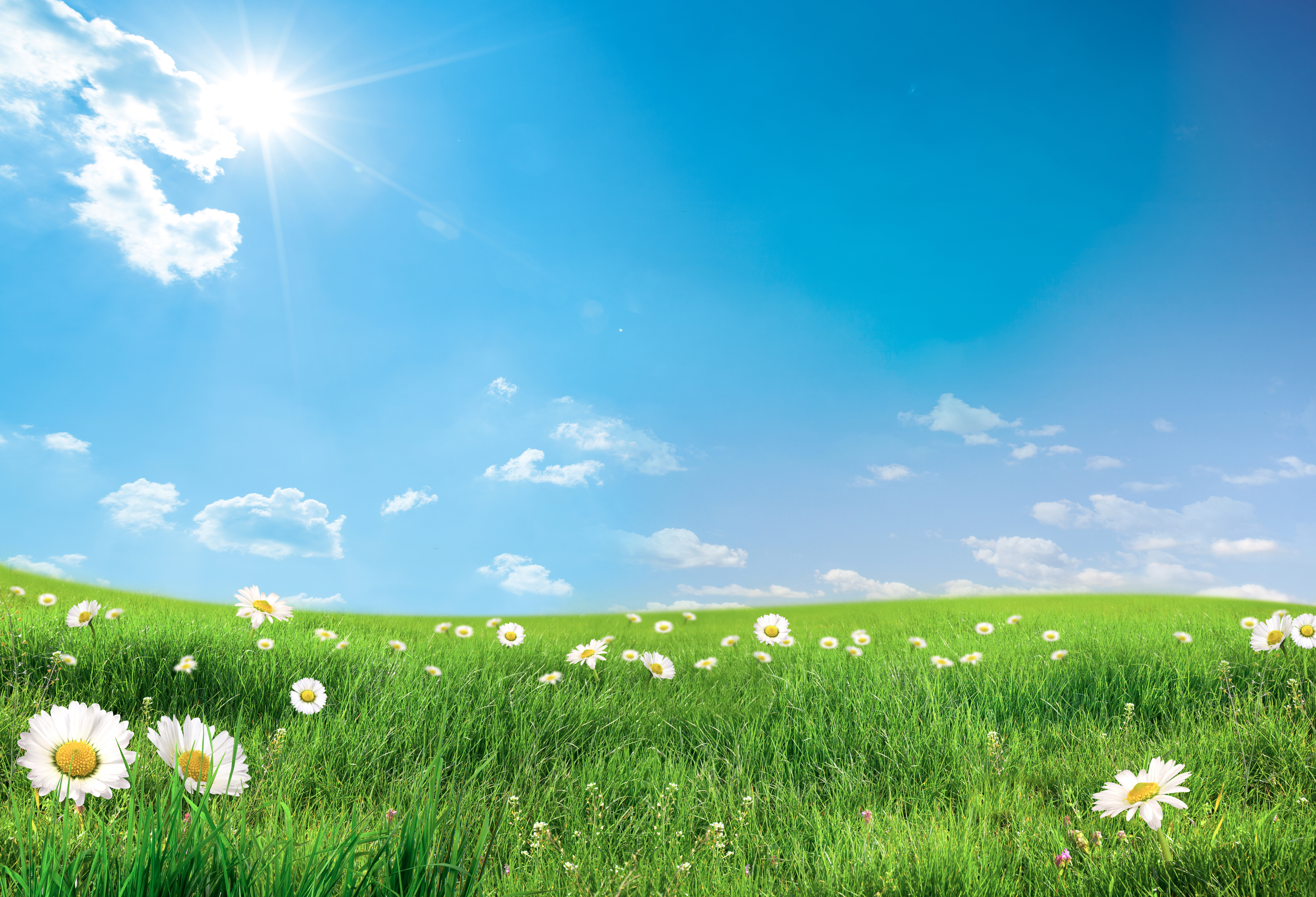 Summer_Lawn_with_Daisies_Background.jpg?m=1432120751.