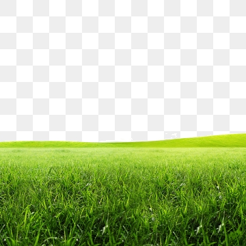 Meadow PNG Images.