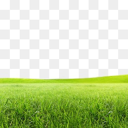 Lawn Png (104+ images in Collection) Page 1.