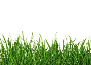 Lawn Care Stock Clipart.