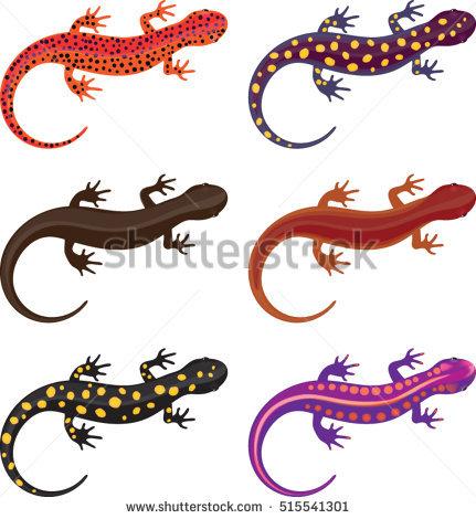 Salamander Stock Photos, Royalty.