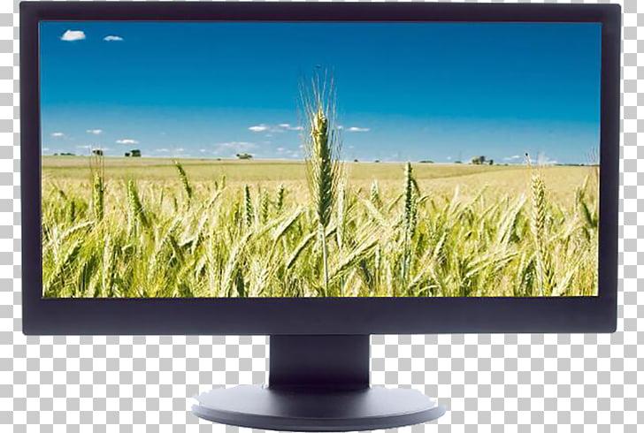 Computer monitor LCD television Liquid.