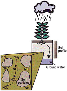 WQ262 Nitrogen in the Environment: Leaching.