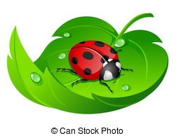 Leaf beetle Illustrations and Clipart. 1,244 Leaf beetle royalty.