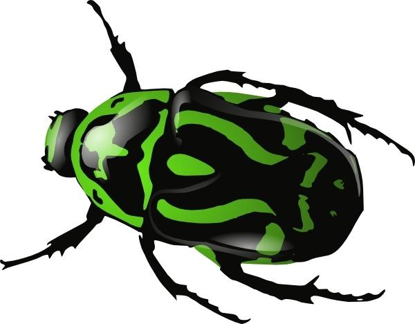 Beetle Clip Art & Beetle Clip Art Clip Art Images.
