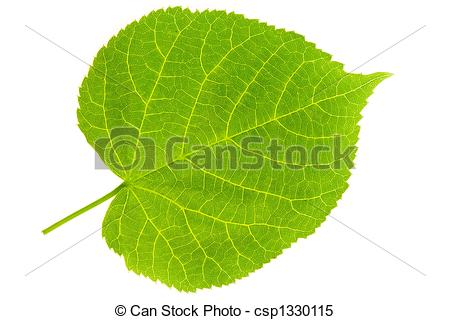 Lime Tree Clipart.