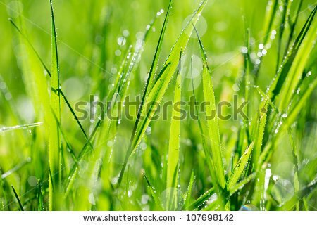 Thick blades of grass clipart.