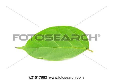 Stock Photo of Broken Bones leaf isolated on white background.